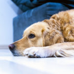 Is My Dog Bored? Tips for Bored Pets
