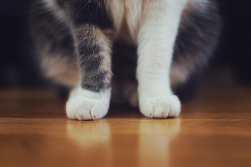 Should I Declaw My Cat?