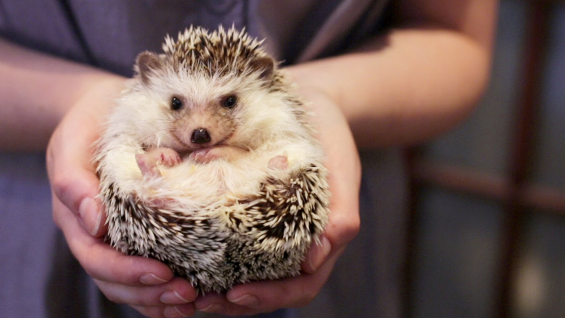 hedgehog - Copy