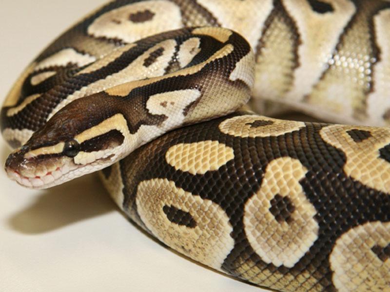 python - Copy