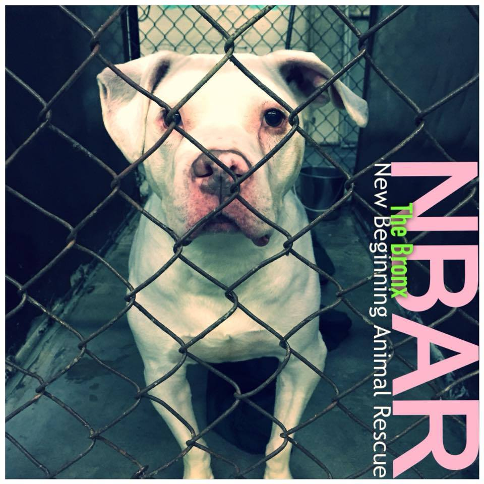 Best Pet Rescue | New York | Best4Pets