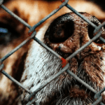 Animal Welfare: Complain or Take Action?