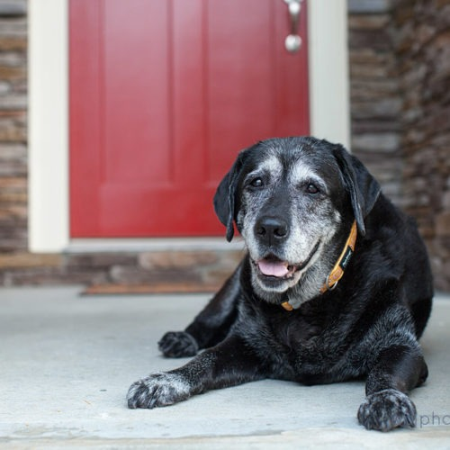 Wagging Seniors: Why adopting a Senior dog may be a better fit for you!
