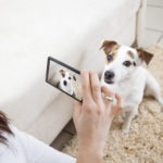 How to Instagram your Pet