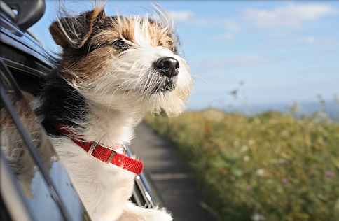 5 Tips for traveling with your Pet!