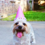 Ideas to Celebrate your Pet's Birthday!