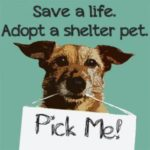 Picking the Right Shelter Dog for You!
