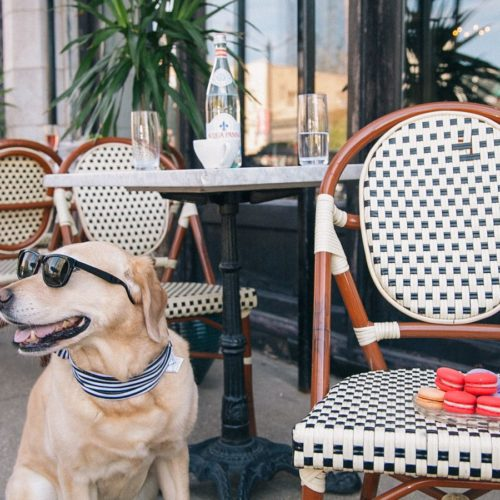 5 Spots to Dine with your Dog in Houston